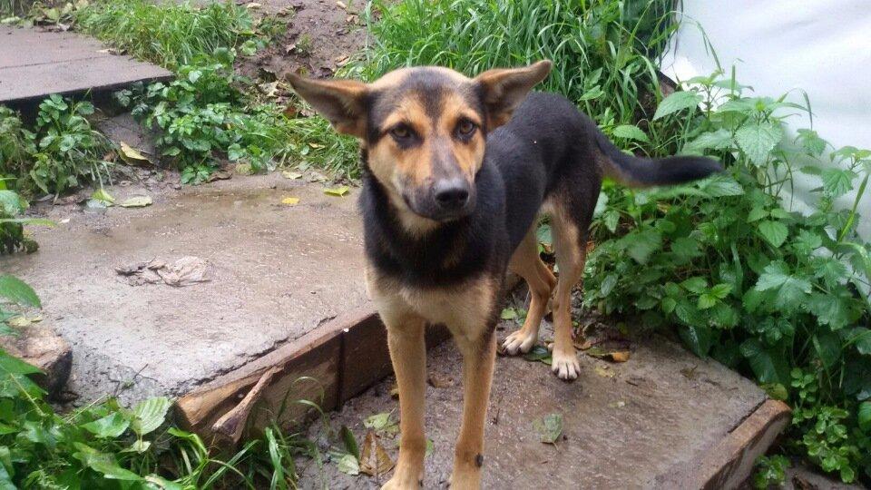 На стройке пёс жил пять лет, но его увидел молодой строитель, он забрал его к себе во двор, и построил ему новый дом.