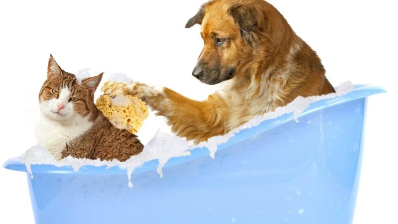 К чему быть готовым, если у вас 3 кота и собака