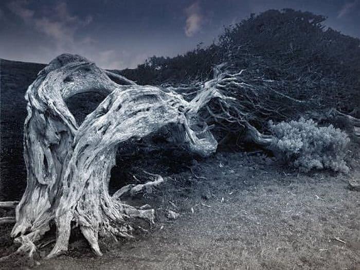 Деревья-людоеды: миф или реальность