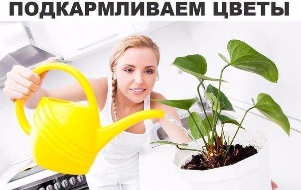 Подкармливаем цветы