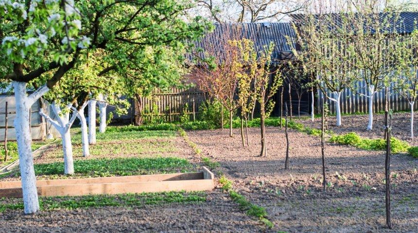 Как правильно посадить деревья в саду