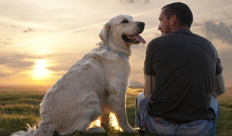 Как хочу изучить я собачий язык...