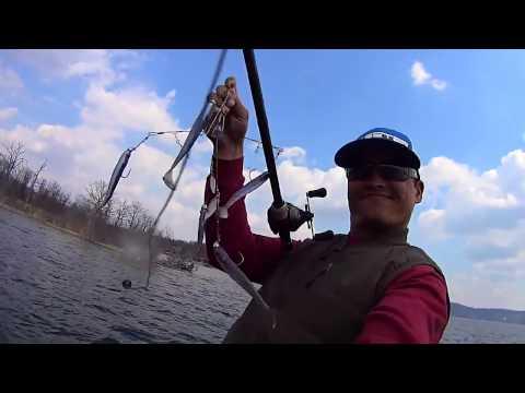 Рыба сходит с ума от Алабамского зонтика