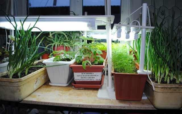Выращивание зелени на балконе: как вырастить на подоконнике .