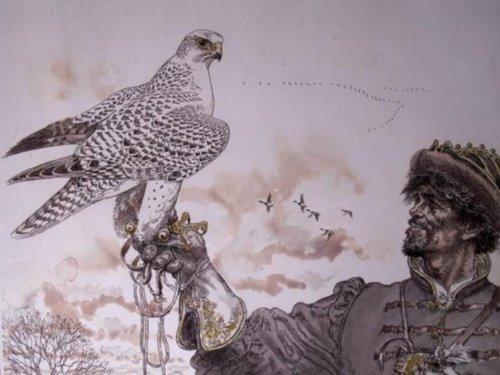 7 фактов о соколиной охоте