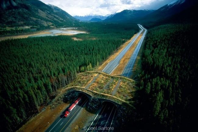 Мост для обитателей леса, Канада доброта, животные, мир