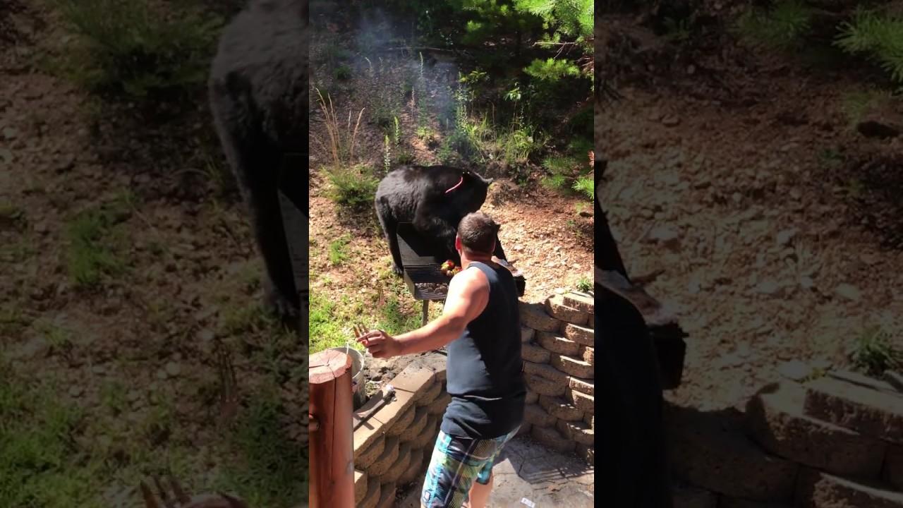 Наглый медведь - похититель барбекю