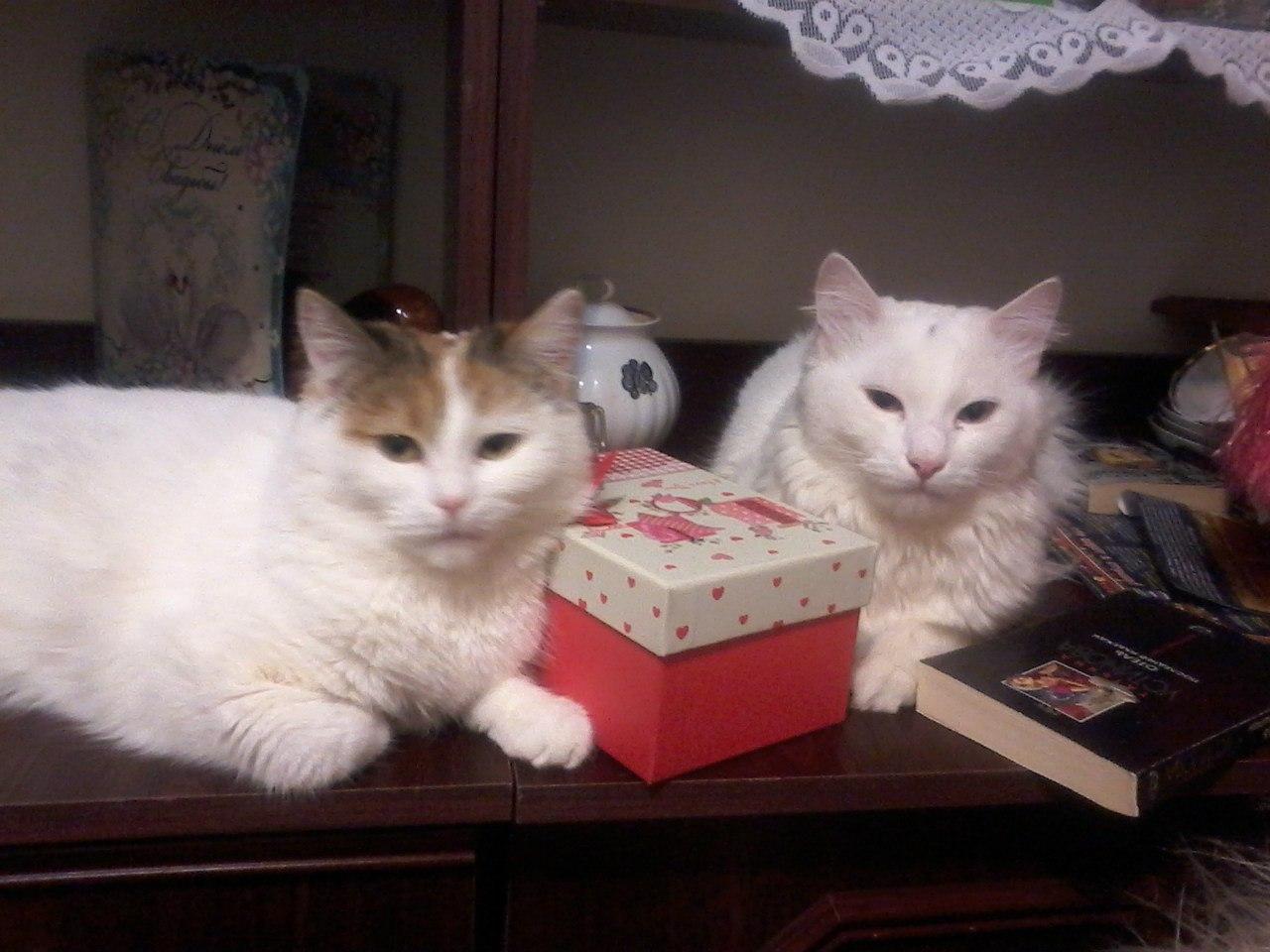 История о двух кошках