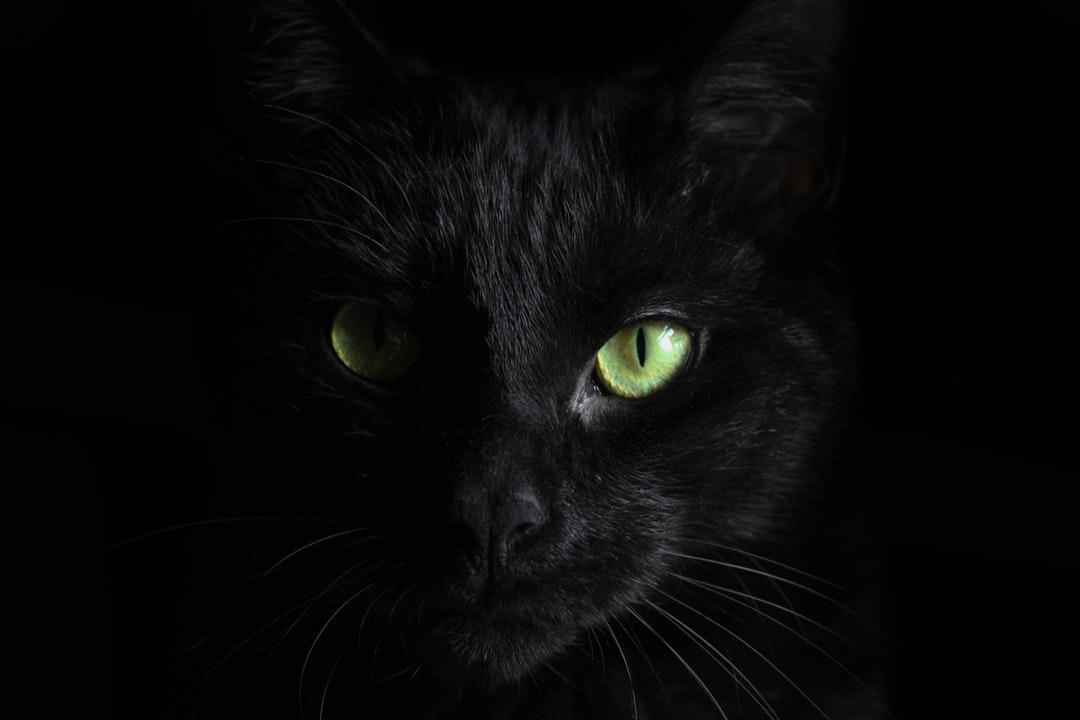 История про кота Васю
