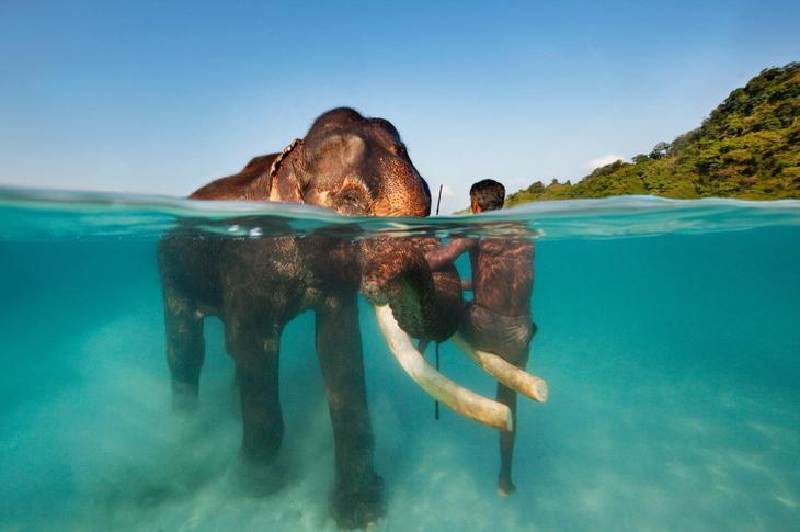 Заплыв со слоном