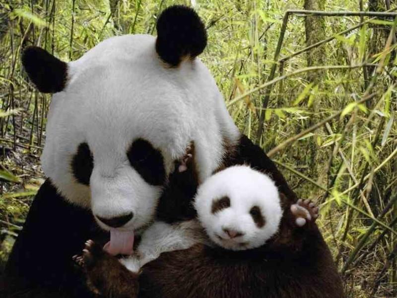 Любовь к детям безгранична,и животные это тоже знают