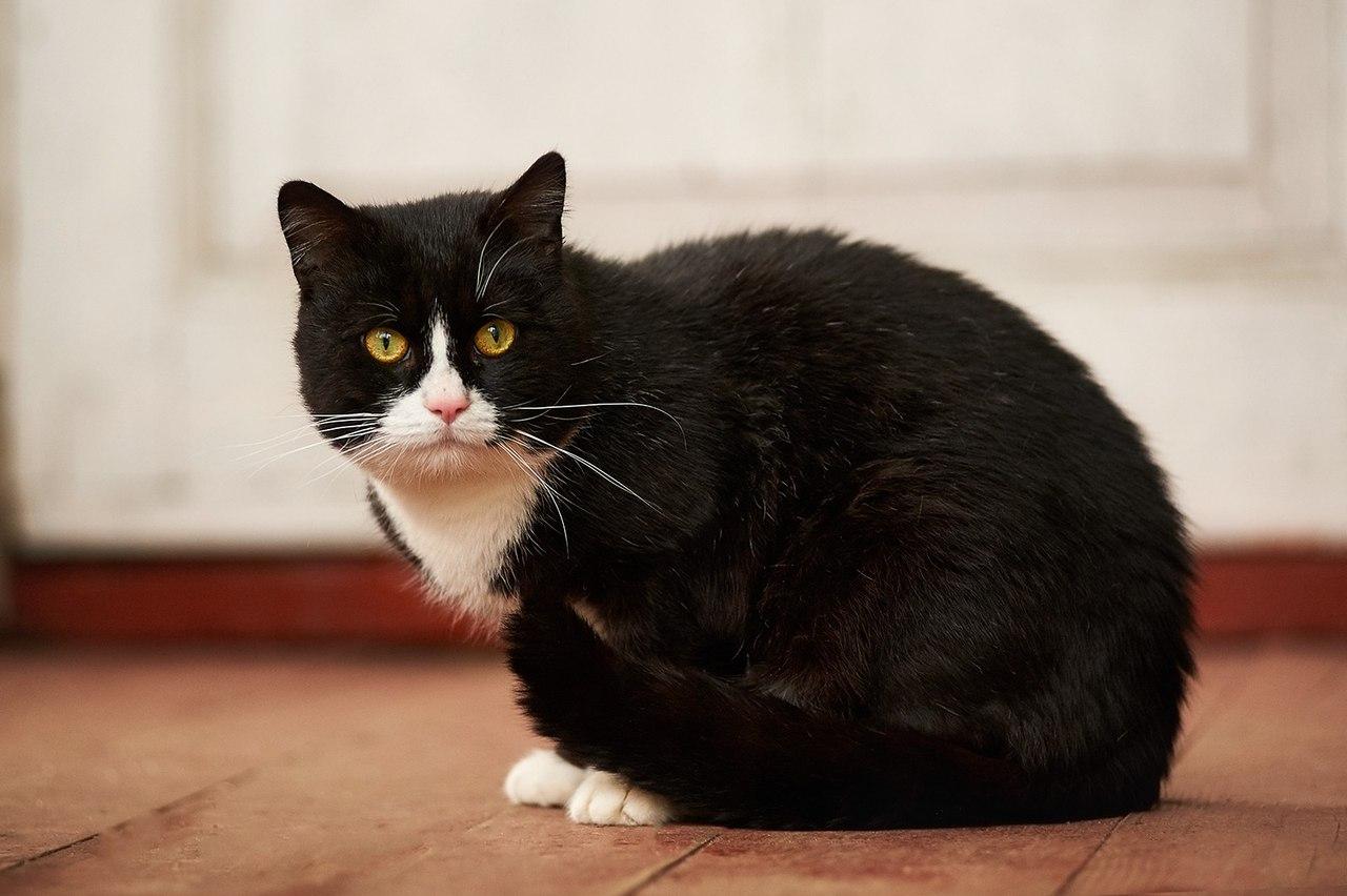 Кот с золотым характером, просто клад!