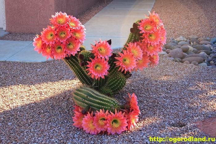 Проблемы с кактусами и их решения