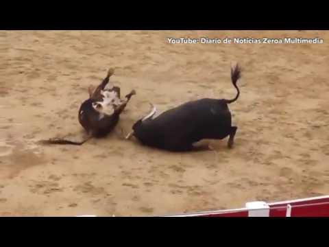 Не дождались матадора: В Испании два быка столкнулись лбами на арене и умерли