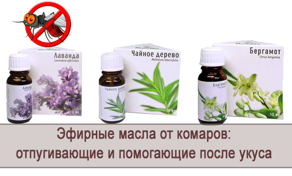 эфирные масла от паразитов в организме человека