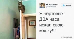 15 кошек, которые взорвали интернет в этом году