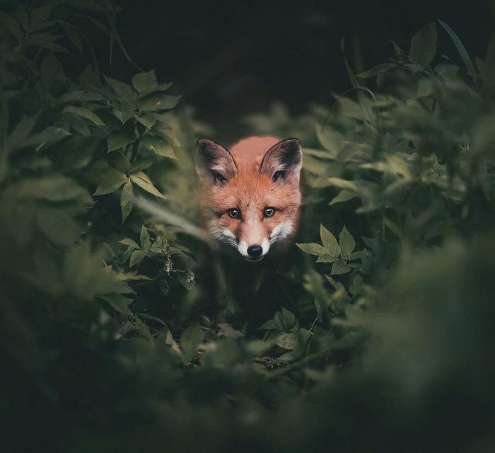 Сама душа леса отражается в глубине глаз животных.