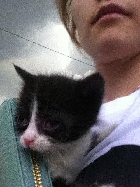 Ее мама-кошка вынесла из подвала и умоляла людей забрать единственного выжившего котенка...