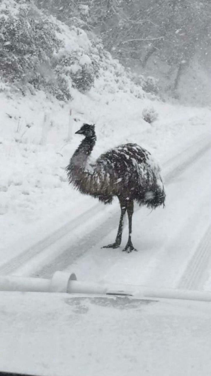 И страусы тоже зима, мир, снег, юмор