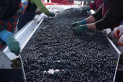 В Россию стали импортировать больше вина