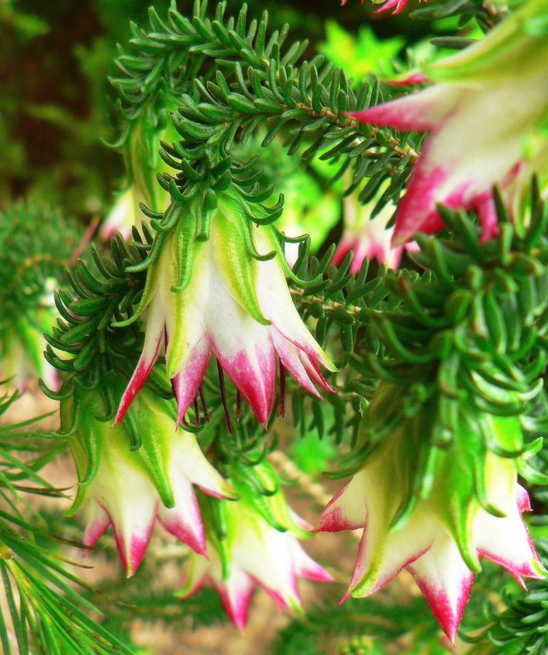 Встреча с природой - удивительные цветы