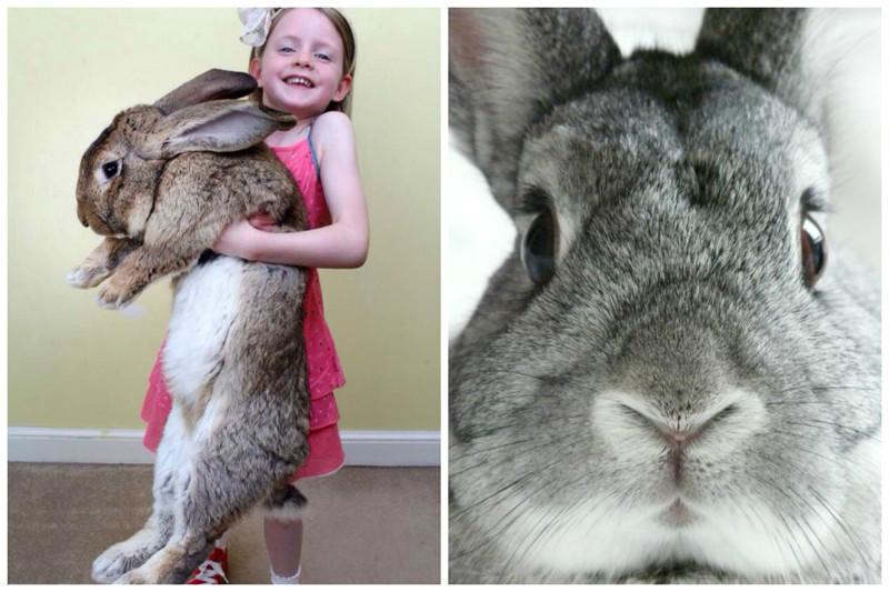 Кролики - это не только ценный мех...