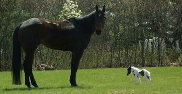 Лошадки,приносящие людям радость!
