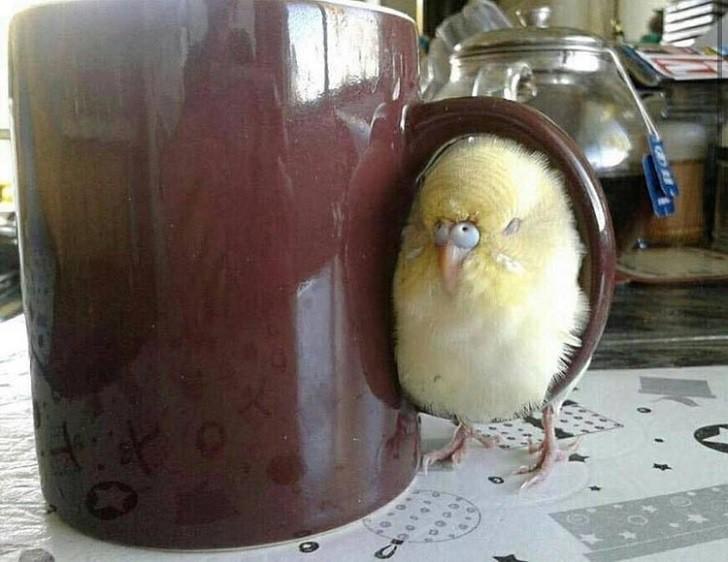 55 уморительных снимков птиц