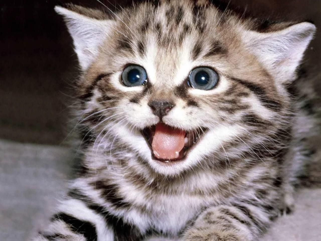 Смешное видео про кошек котят