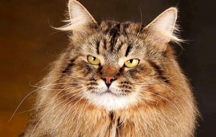 Смешная история про кота Мур…