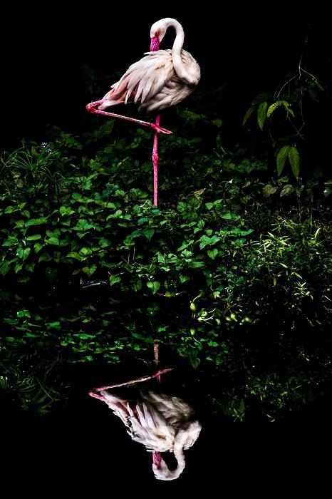 Фотограф: Стайнер Ванг (Steiner Wang), Тайвань.