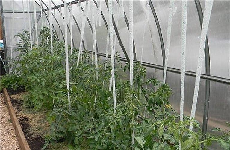 Подвязки для томатов
