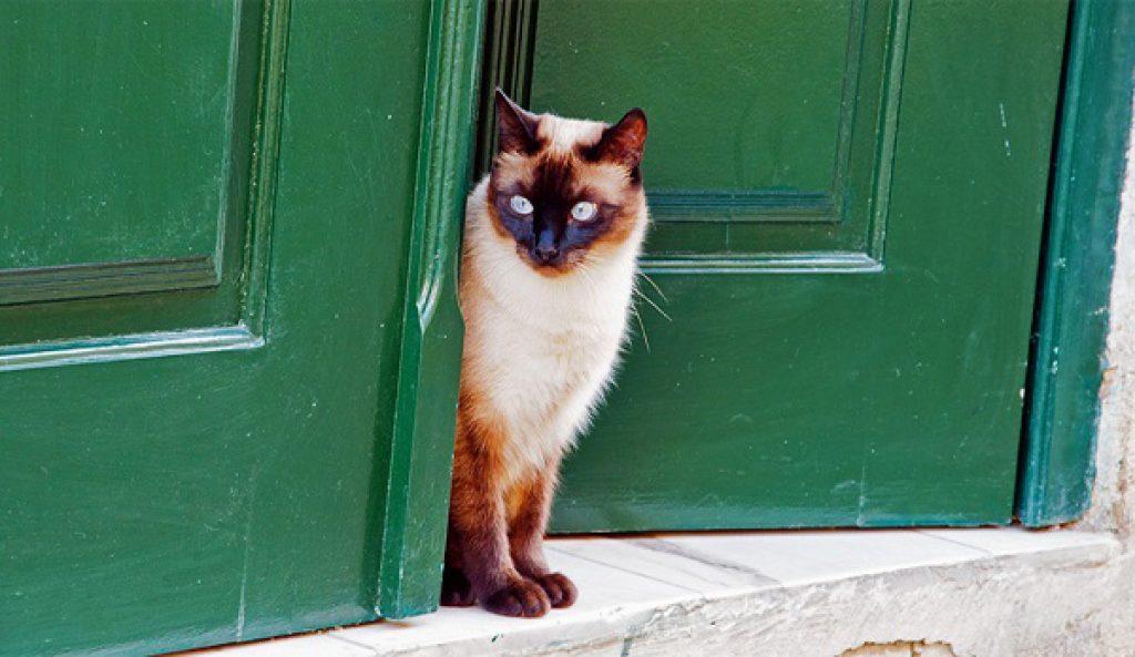 Кошка звонит в звонок, чтобы попасть домой! Невероятный интеллект