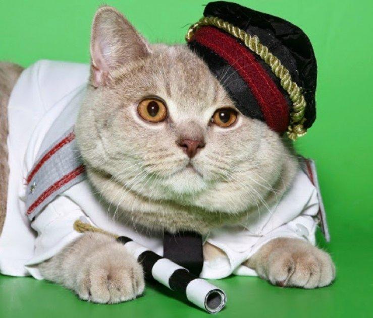 Ajaib-7-Kucing-Ini-Memiliki-Karier-Lebih-Sukses-Dari-Manusia_739x631