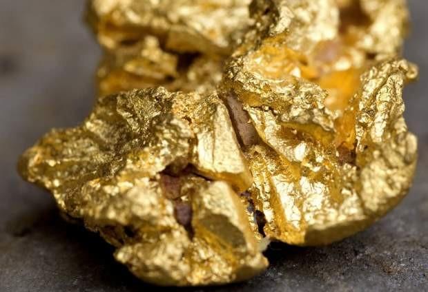 Чувствующий запах золота