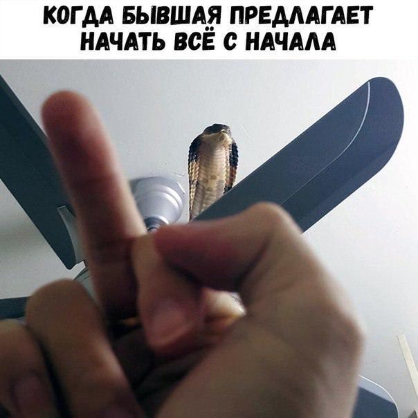 мемы и ...
