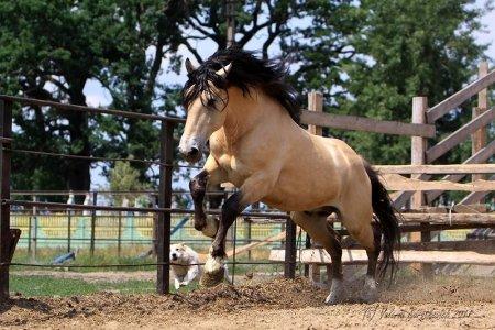 Фото лошади саврасой масти