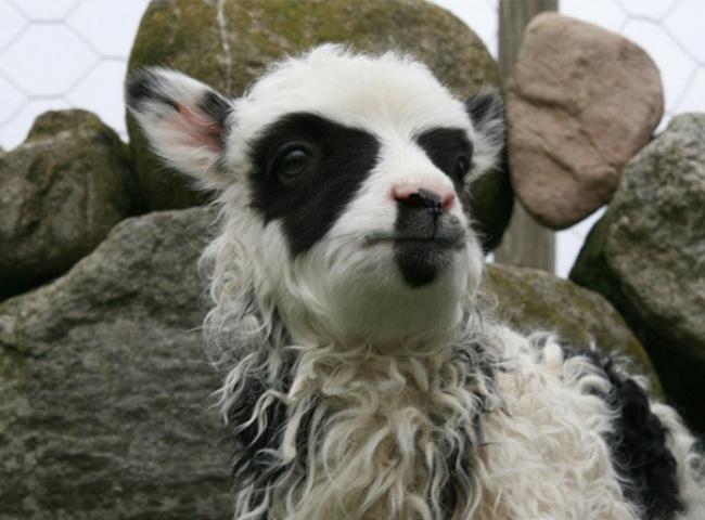 Бывают же на свете чудеса — 10 животных, для окраса которых природа не пожалела фантазии