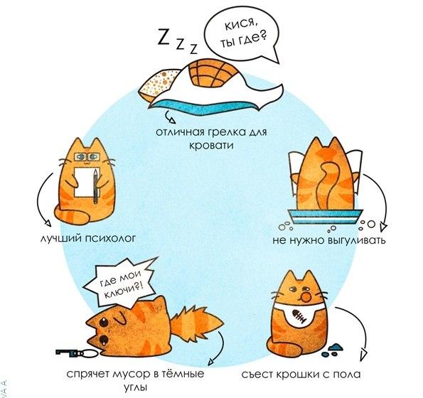 Пять причин завести кота