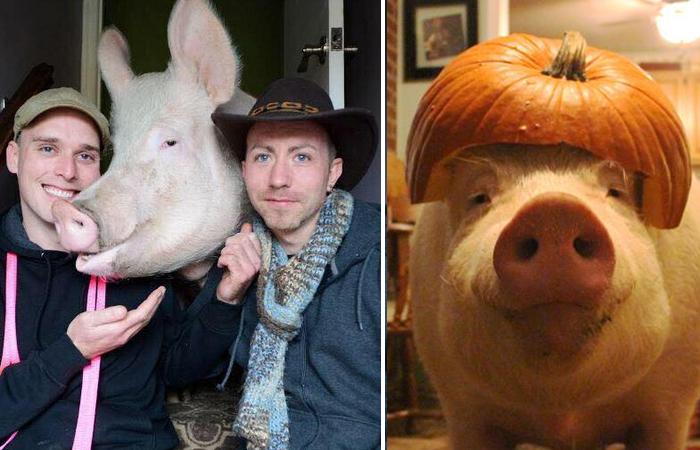 Парень мечтал о декоративной свинке, но питомец его здорово удивил