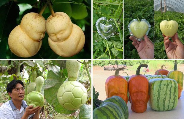 Необычные овощи и фрукты от китайских производителей