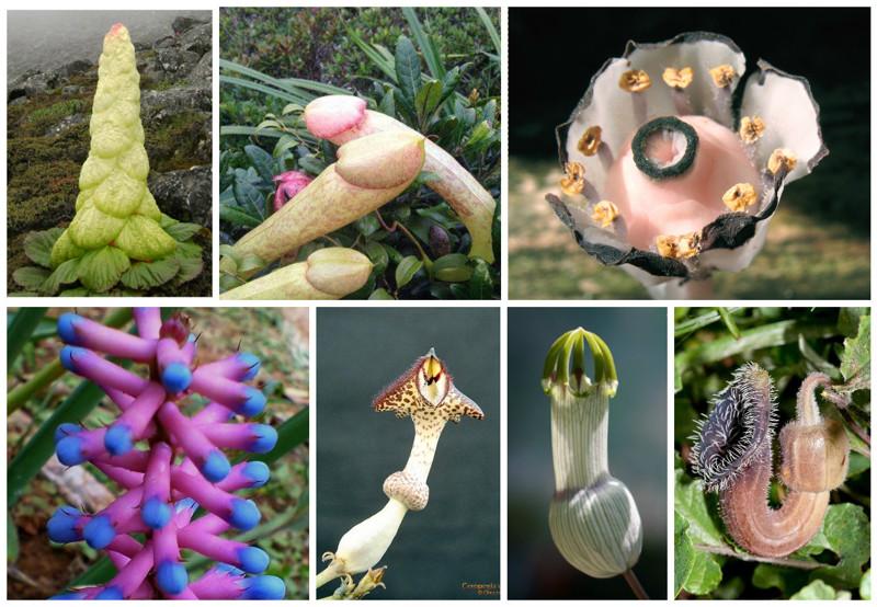 Сумасшедшие цветы и растения мира