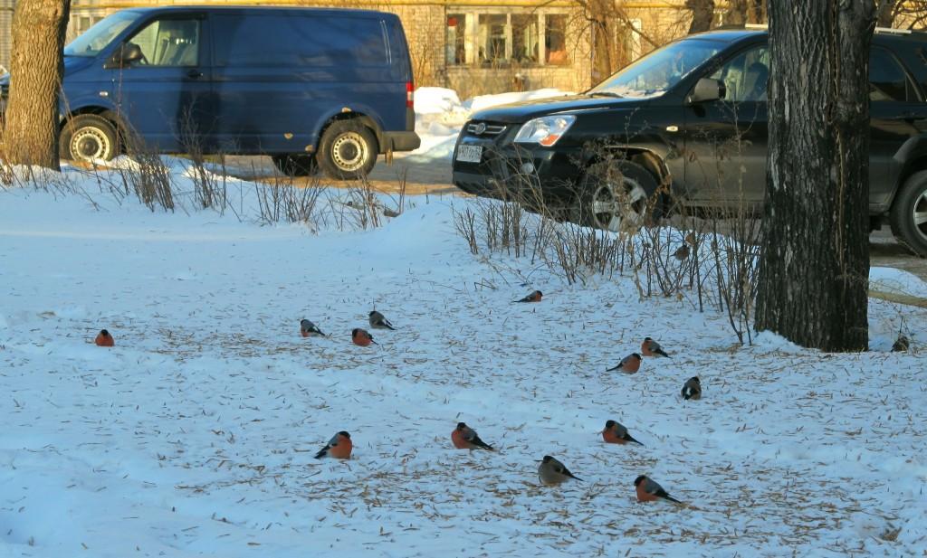 """Рядом с """"цивилизацией"""" птицы зимы!"""