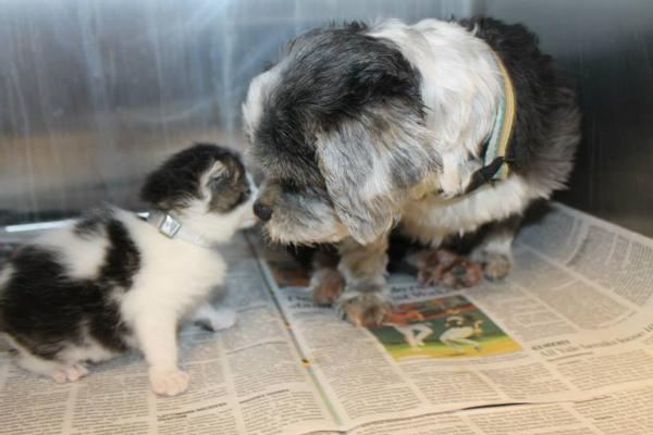 Рискуя жизнью, собака спасла котенка. А после выкормила собственным молоком