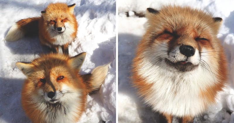 Самое пушистое место на Земле: деревня лис в Японии