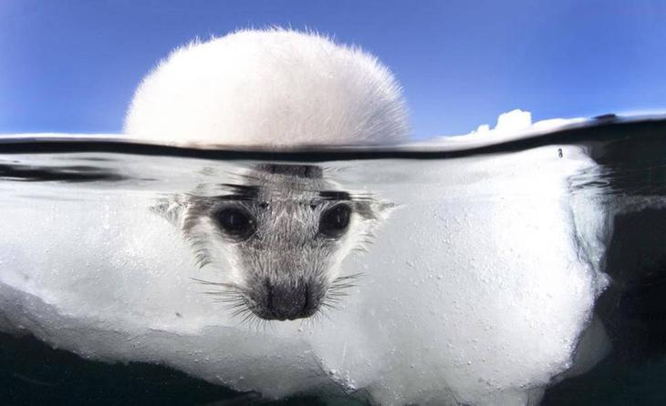 В ледяной воде