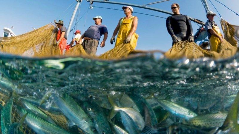 Океан полностью кормит половину жителей планеты интересное, мировой океан, океан, факты
