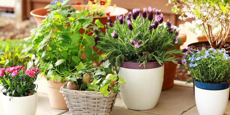 4 правила для лучшего ухода за комнатными растениями