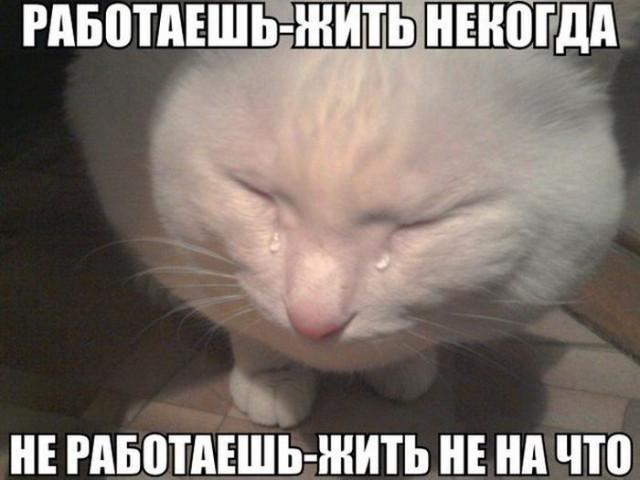 История одного кота-мема