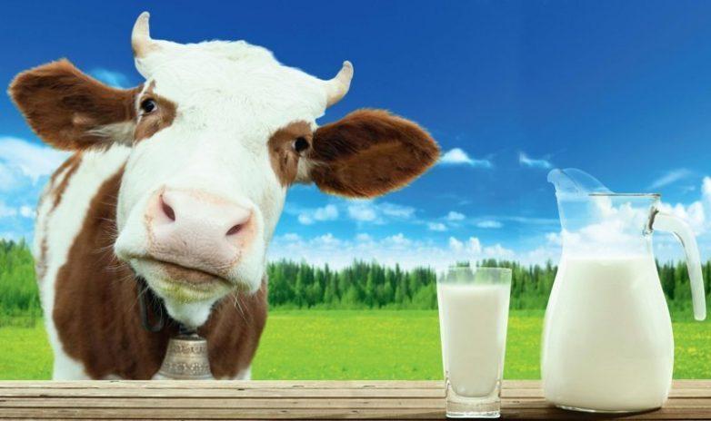 10 продуктов с большим содержанием кальция, чем в молоке